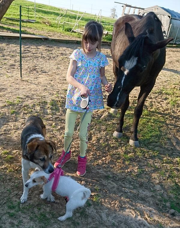 Nina mit ihren Tieren